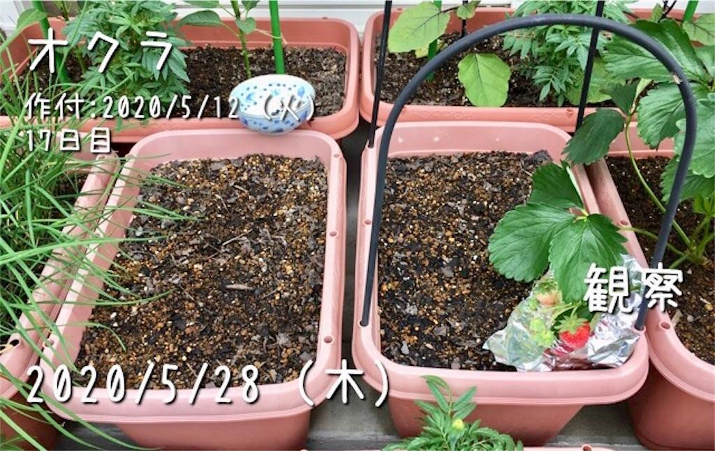f:id:Mt_vegetable:20200529211048j:image