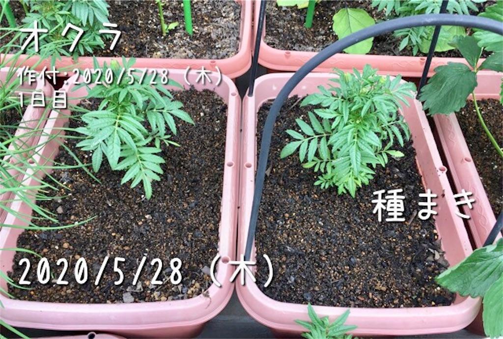 f:id:Mt_vegetable:20200529211051j:image