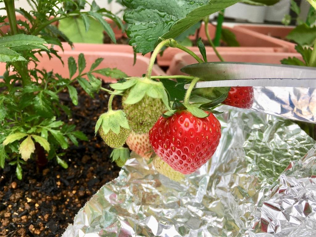 f:id:Mt_vegetable:20200529211121j:image