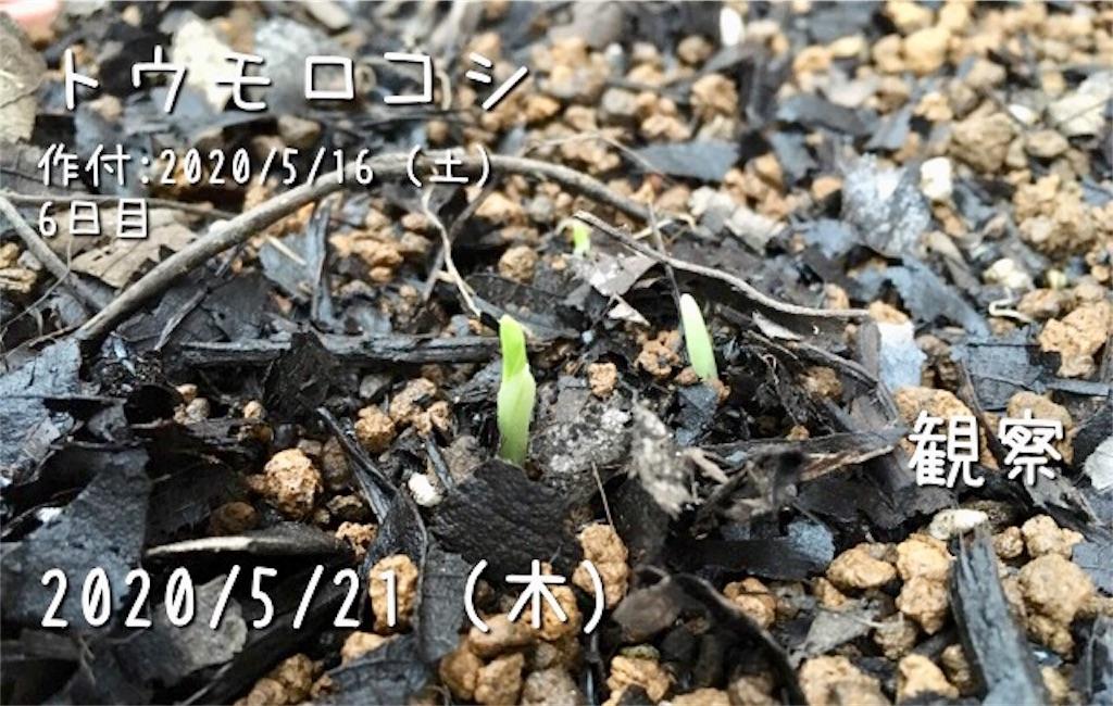f:id:Mt_vegetable:20200529223424j:image