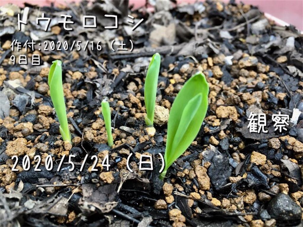 f:id:Mt_vegetable:20200529223428j:image