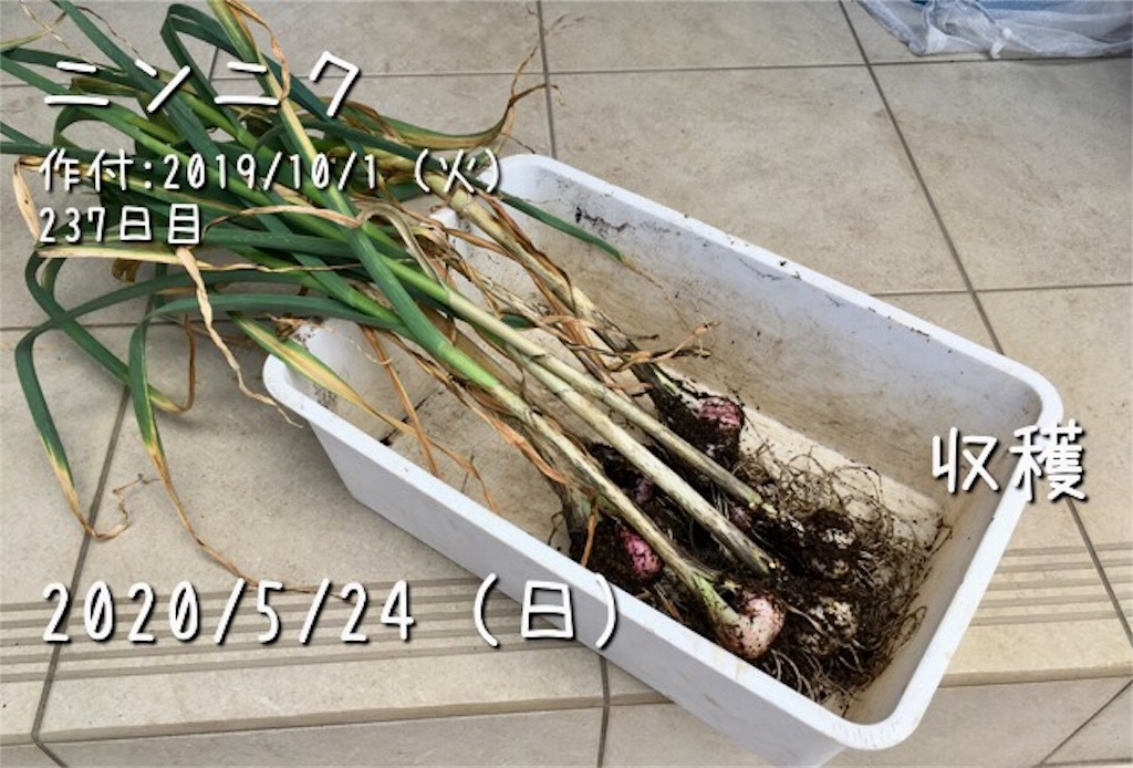 f:id:Mt_vegetable:20200529224324j:image
