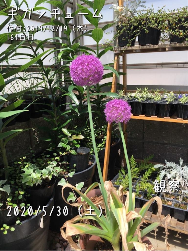 f:id:Mt_vegetable:20200530174033j:image