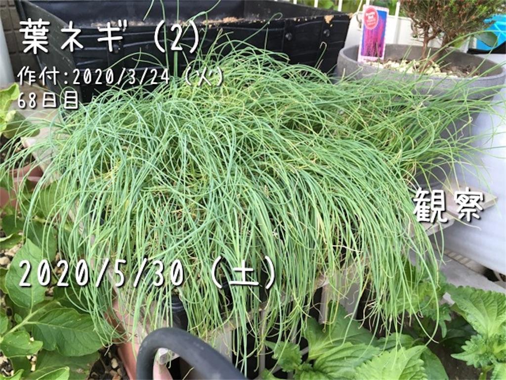 f:id:Mt_vegetable:20200601183530j:image