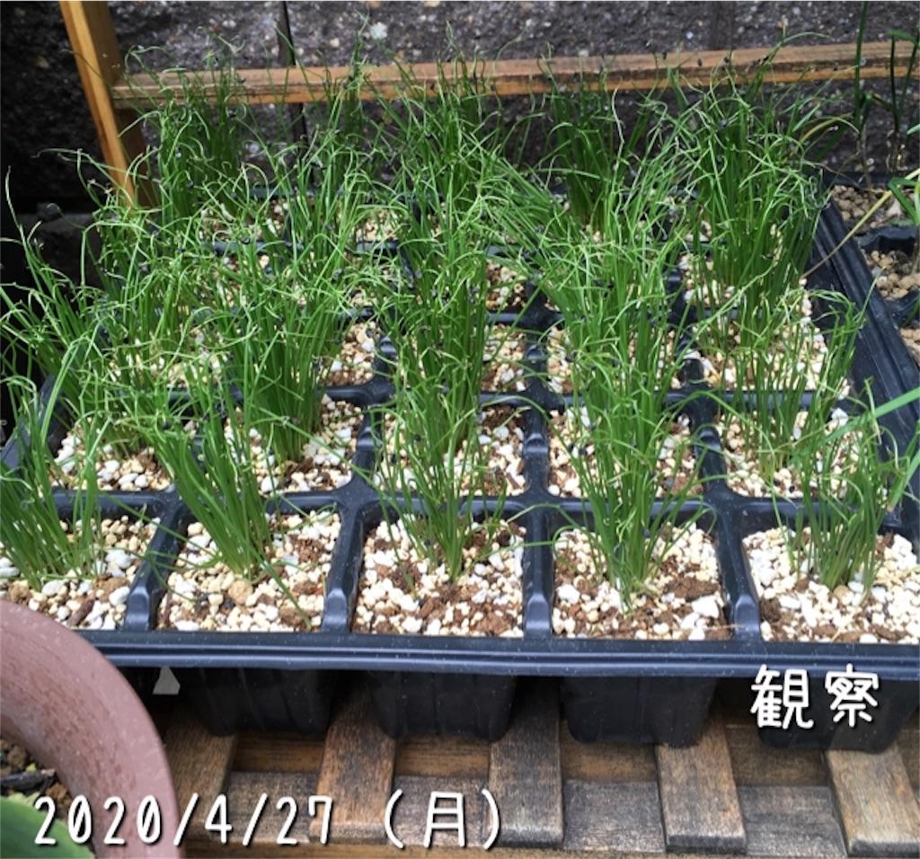 f:id:Mt_vegetable:20200601184210j:image