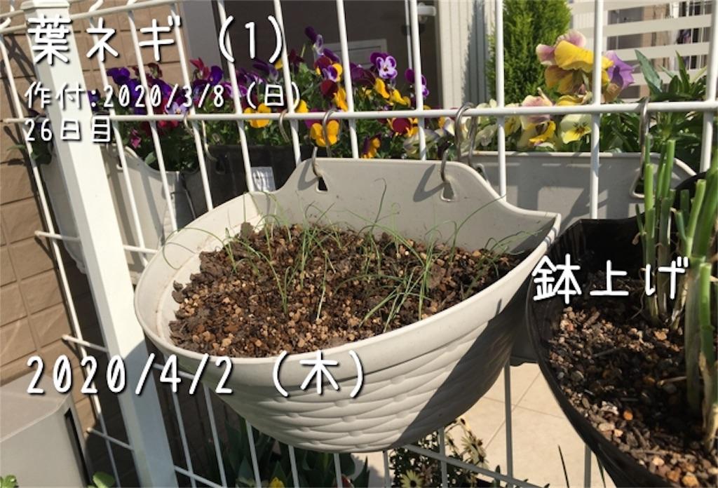 f:id:Mt_vegetable:20200601184213j:image