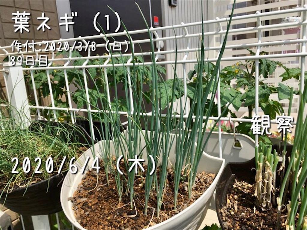 f:id:Mt_vegetable:20200606172353j:image