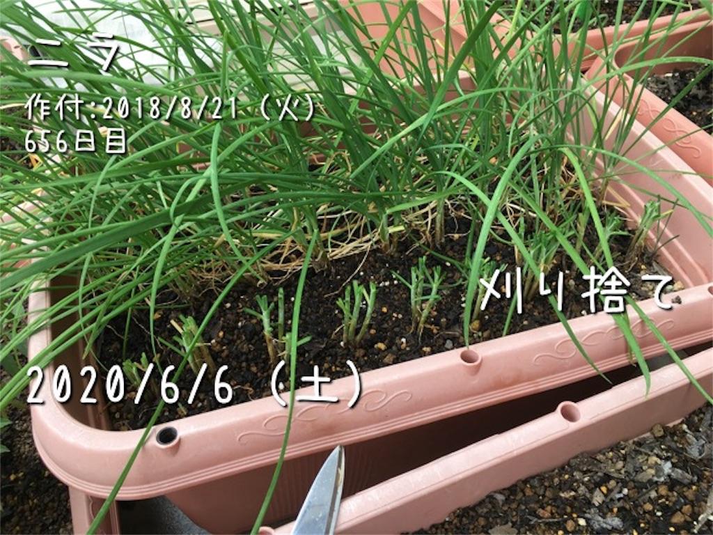 f:id:Mt_vegetable:20200606172356j:image