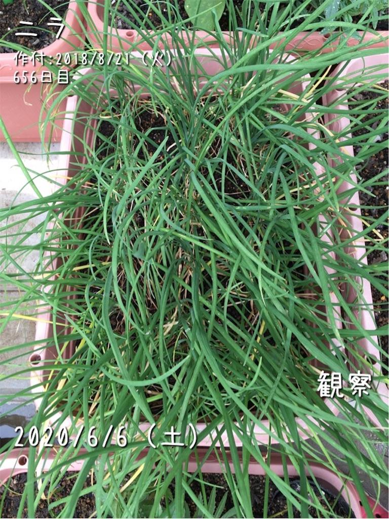 f:id:Mt_vegetable:20200606172423j:image
