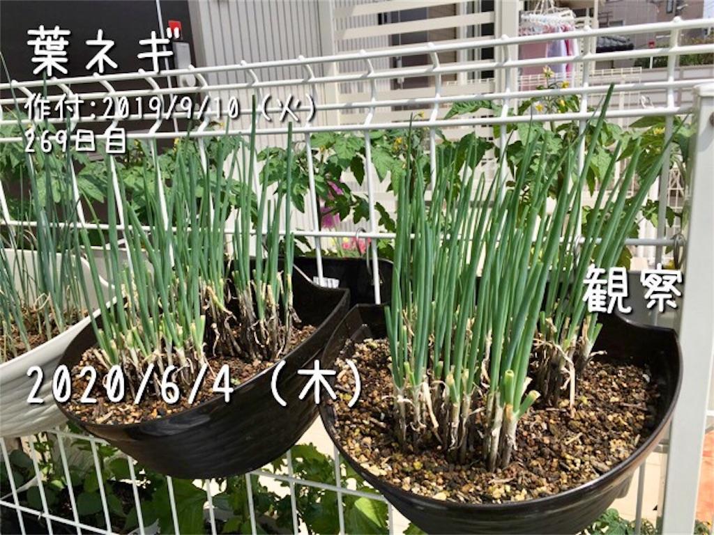 f:id:Mt_vegetable:20200606172433j:image