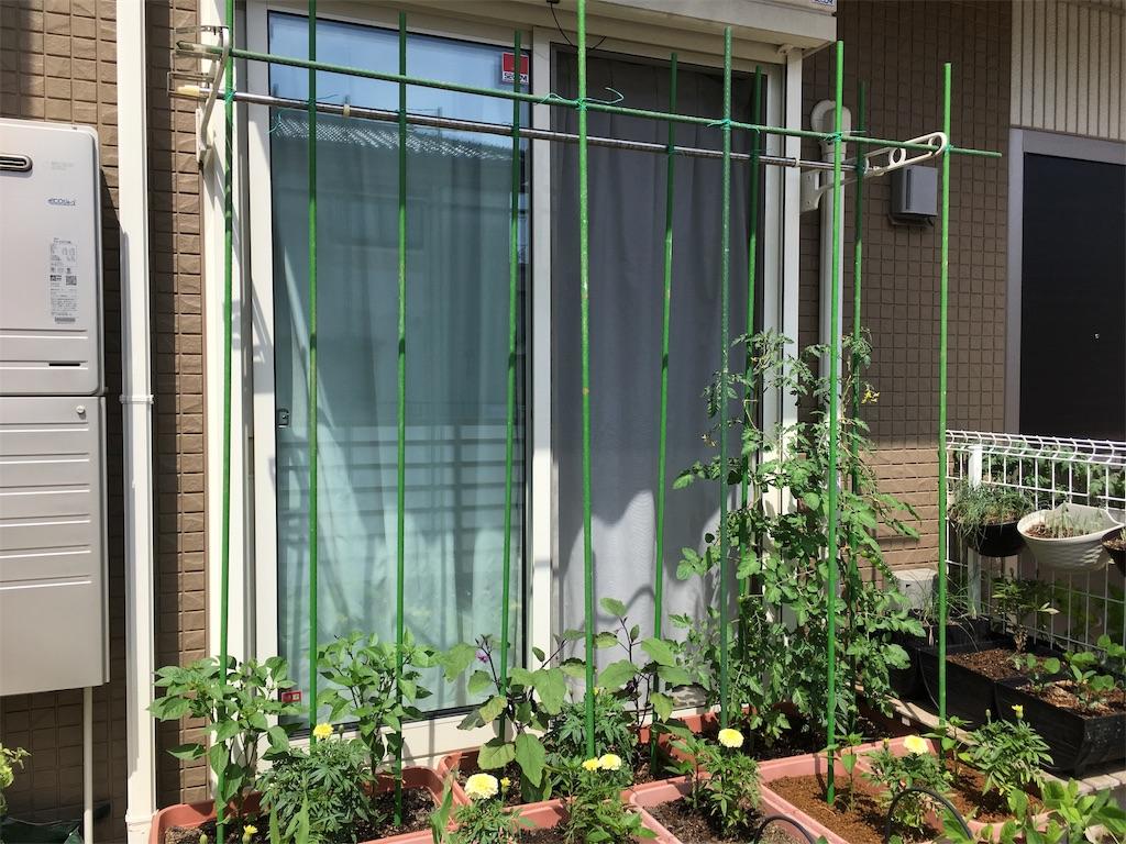 f:id:Mt_vegetable:20200618160807j:image