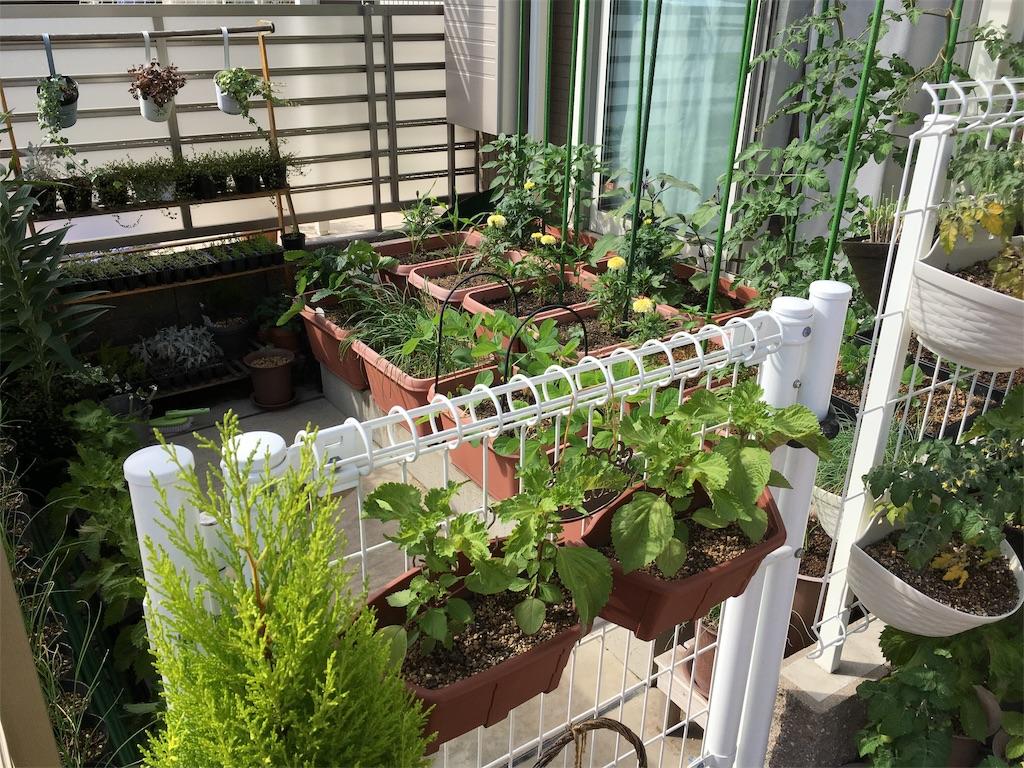 f:id:Mt_vegetable:20200618160813j:image