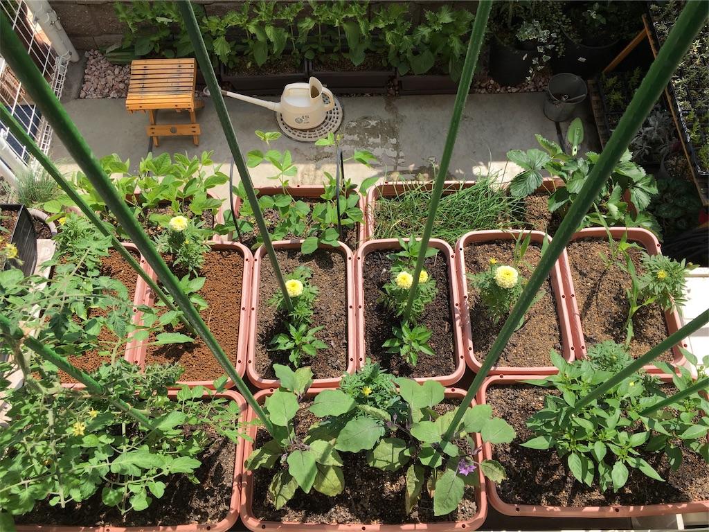 f:id:Mt_vegetable:20200618160820j:image