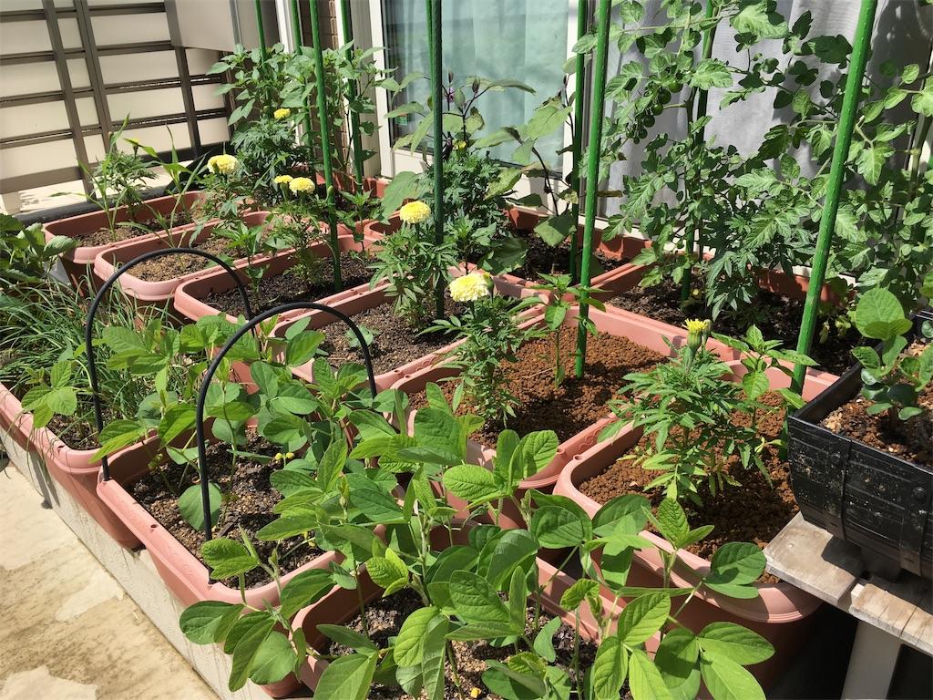 f:id:Mt_vegetable:20200618160900j:image