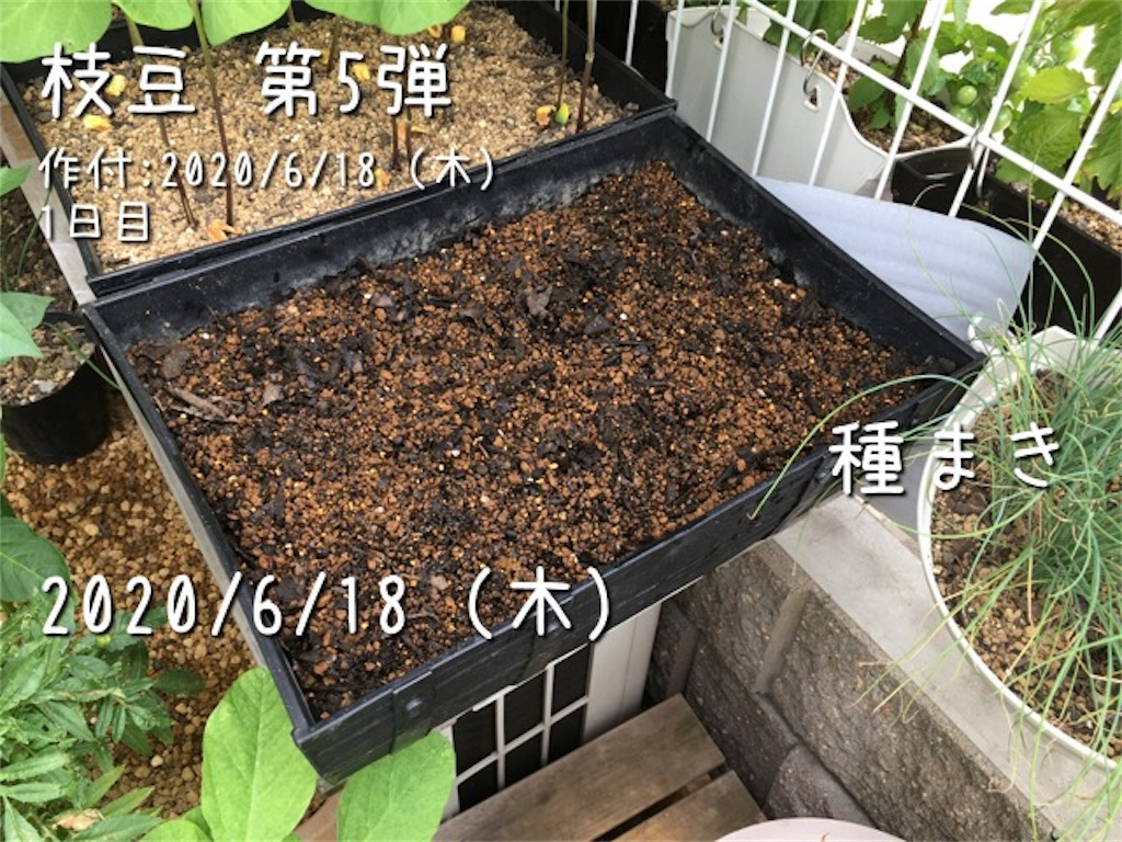 f:id:Mt_vegetable:20200618161203j:image