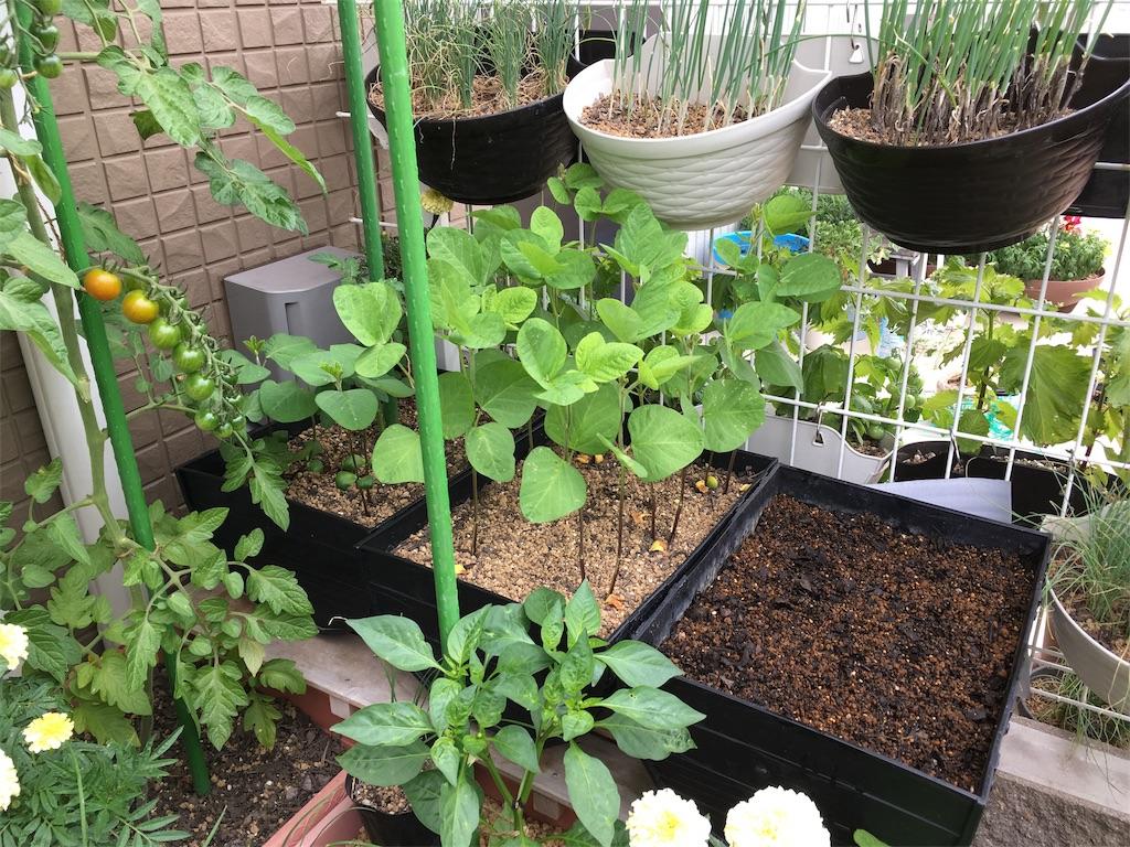 f:id:Mt_vegetable:20200618161236j:image