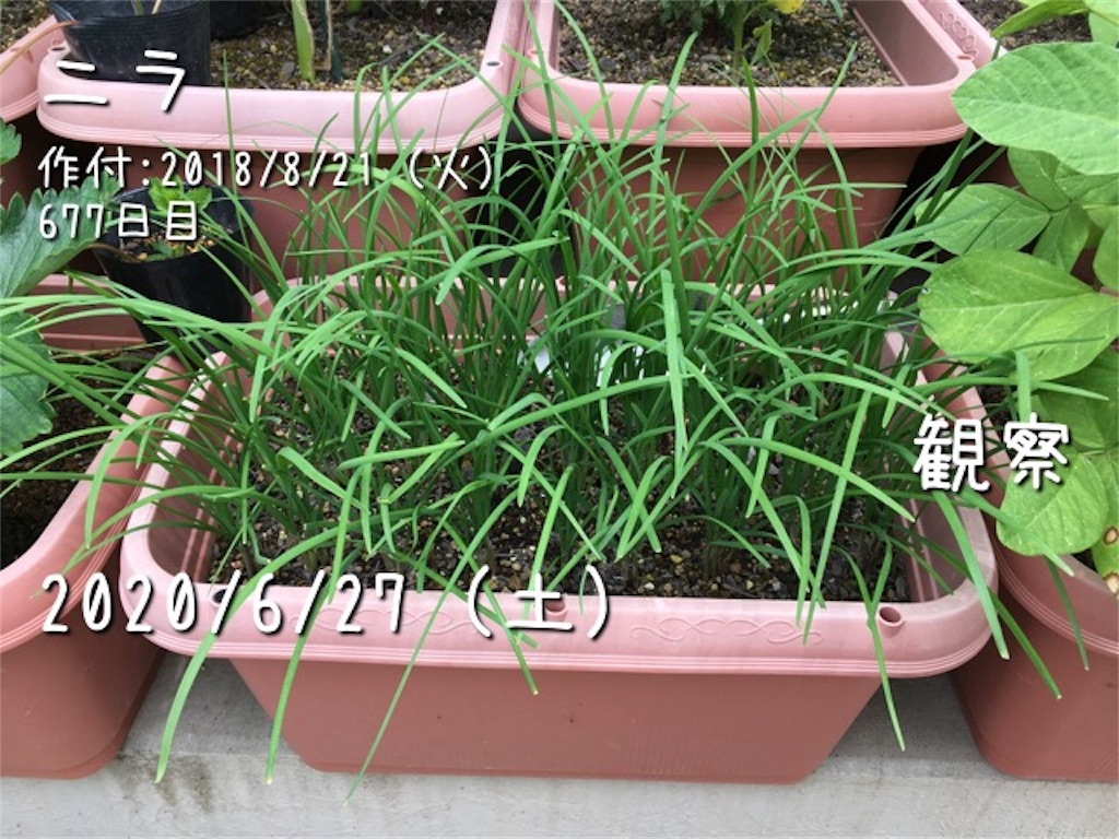 f:id:Mt_vegetable:20200627211518j:image