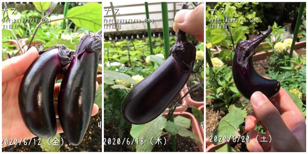 f:id:Mt_vegetable:20200627211521j:image