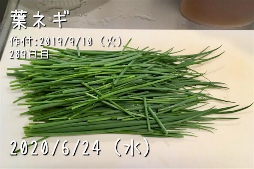 f:id:Mt_vegetable:20200627211524j:image