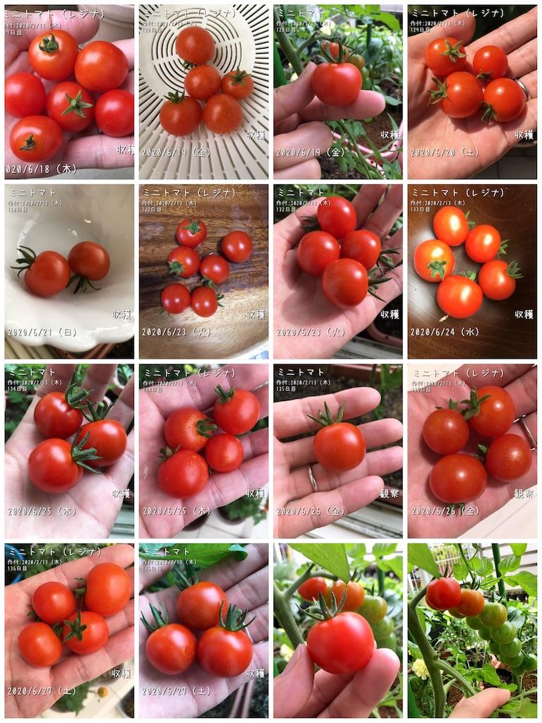 f:id:Mt_vegetable:20200627211534j:image