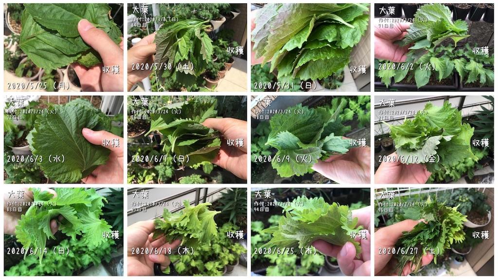 f:id:Mt_vegetable:20200627211537j:image