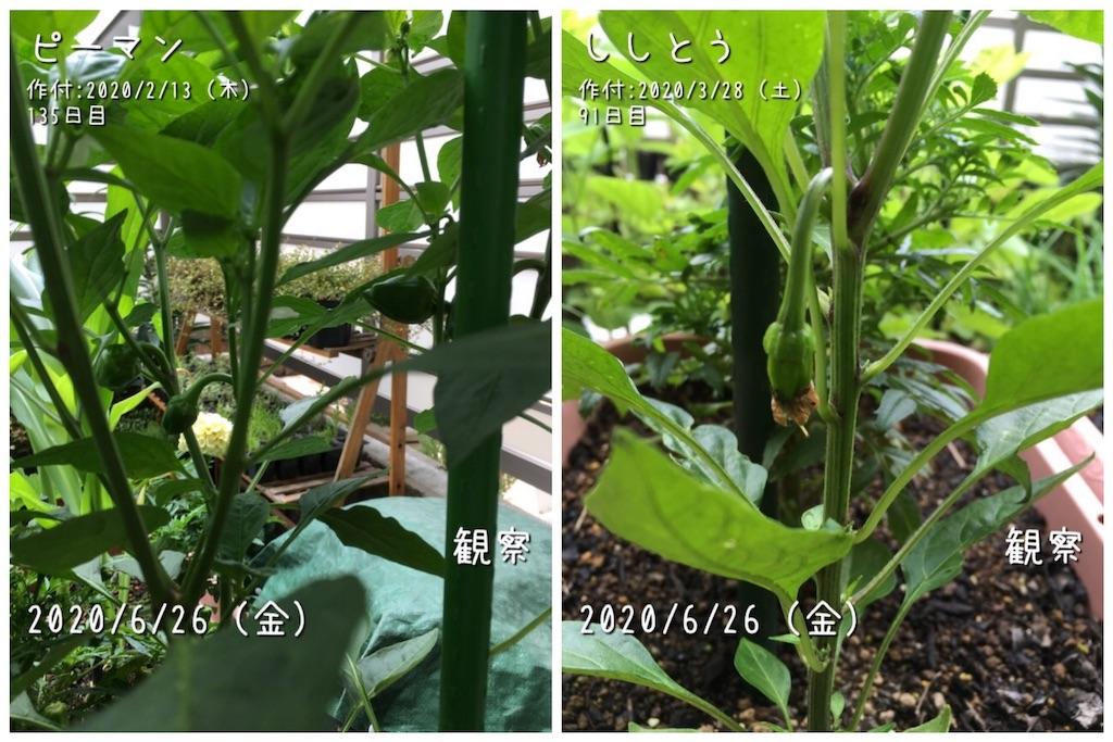 f:id:Mt_vegetable:20200627213456j:image