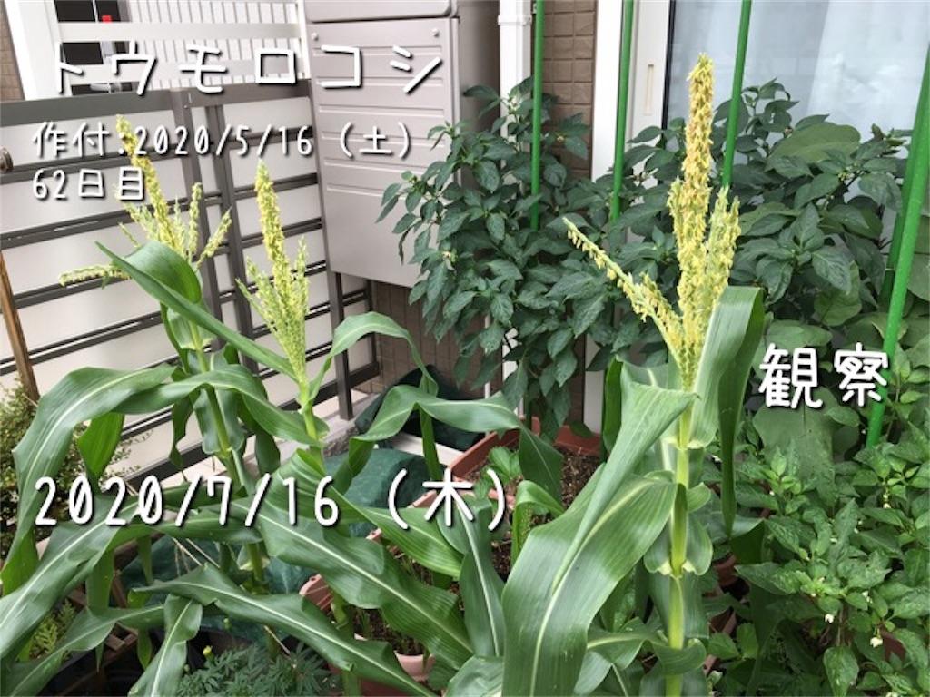 f:id:Mt_vegetable:20200716173127j:image