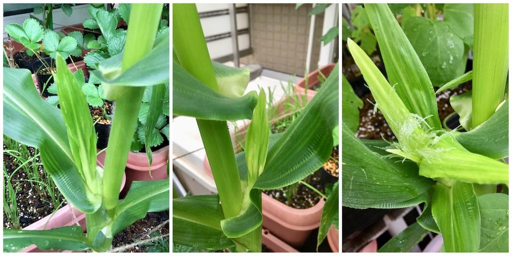f:id:Mt_vegetable:20200718181009j:image