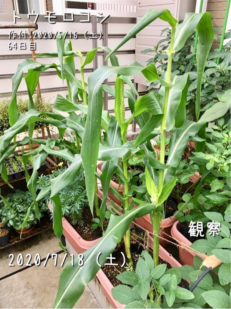 f:id:Mt_vegetable:20200718181016j:image