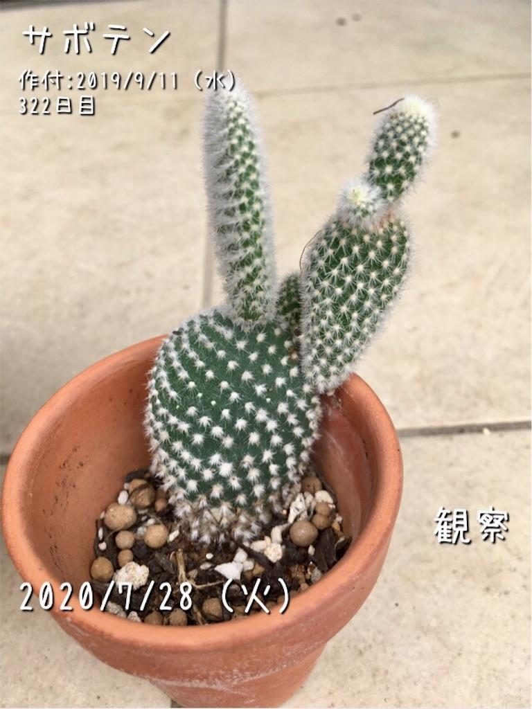 f:id:Mt_vegetable:20200728200452j:image