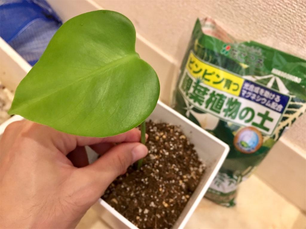 f:id:Mt_vegetable:20200728200512j:image