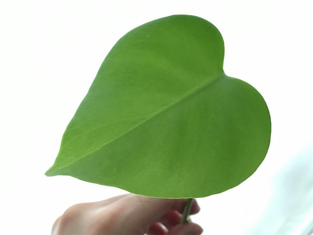 f:id:Mt_vegetable:20200728200516j:image