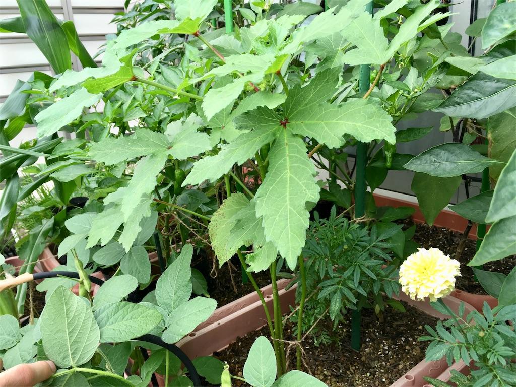 f:id:Mt_vegetable:20200728200810j:image