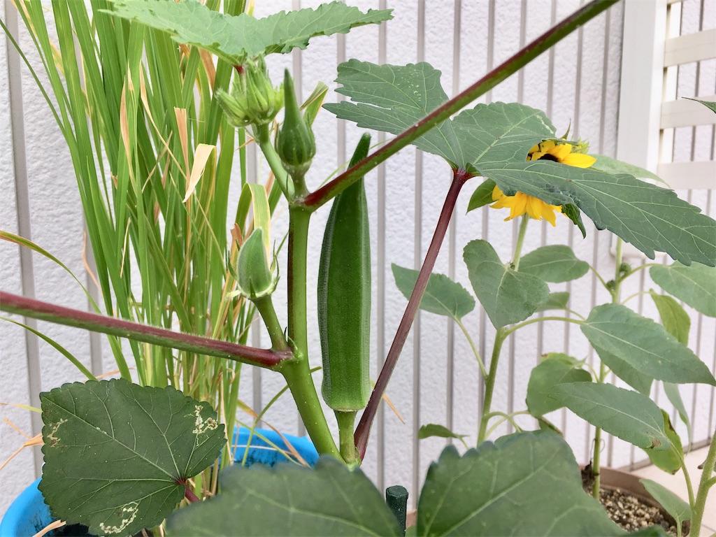 f:id:Mt_vegetable:20200728200823j:image