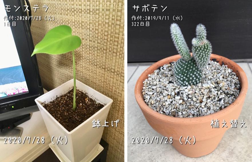 f:id:Mt_vegetable:20200728204447p:plain