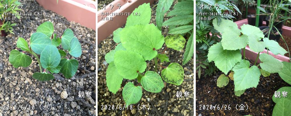 f:id:Mt_vegetable:20200728212925p:plain