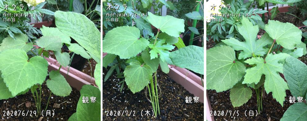 f:id:Mt_vegetable:20200728212936p:plain