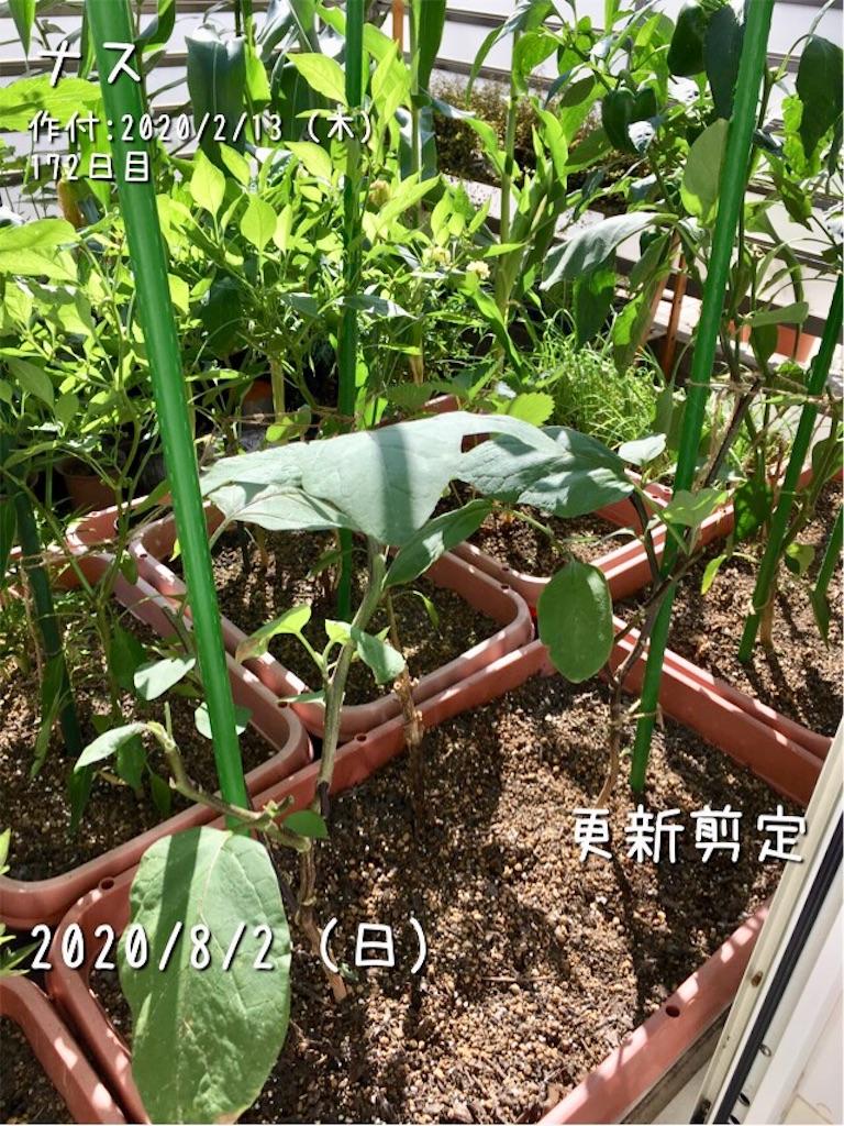 f:id:Mt_vegetable:20200802213844j:image