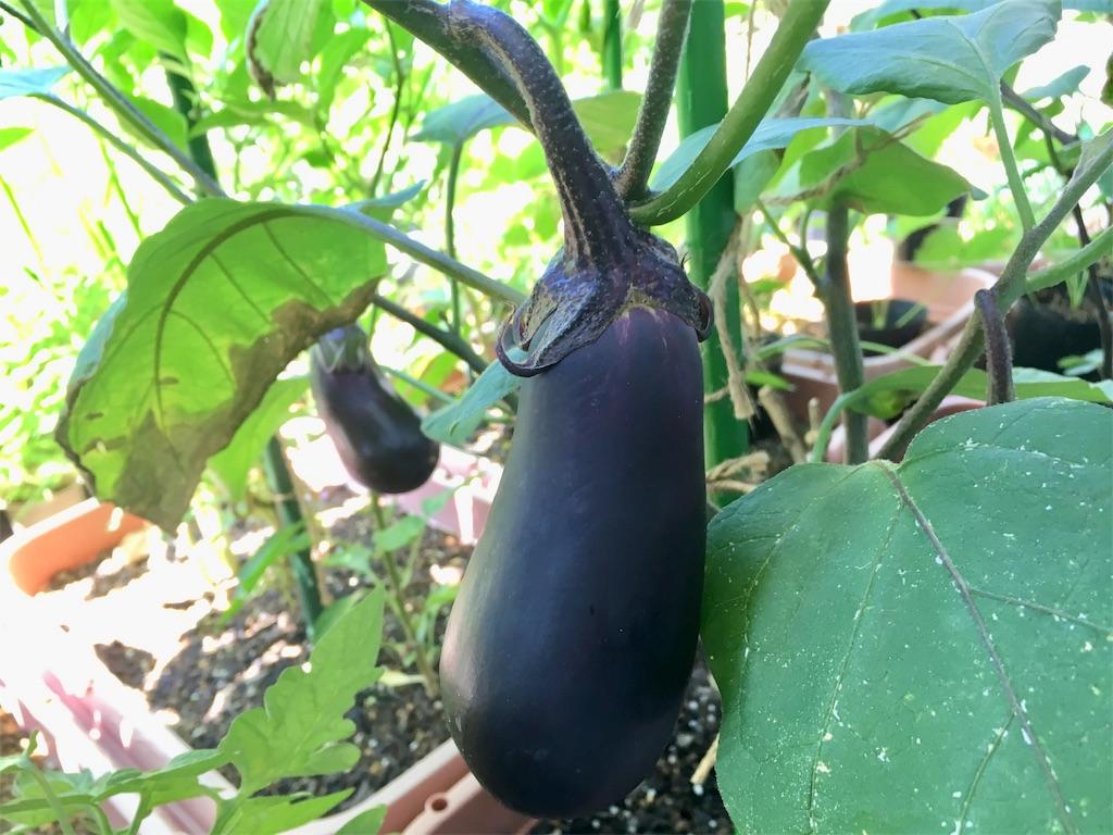 f:id:Mt_vegetable:20200802213910j:image