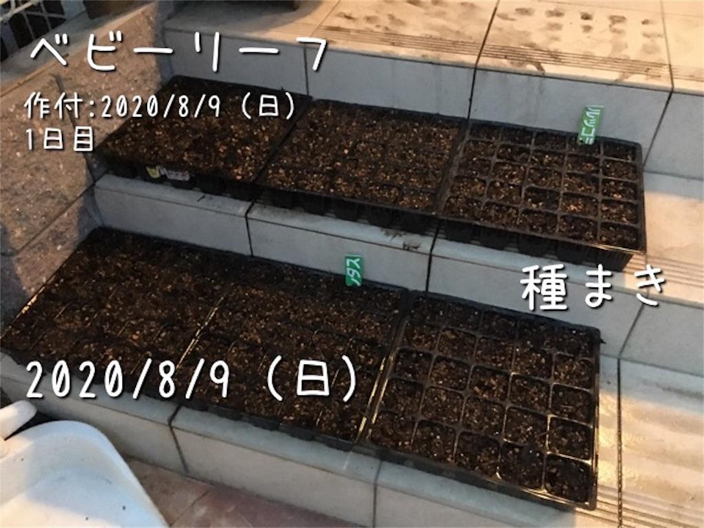 f:id:Mt_vegetable:20200809210926j:image