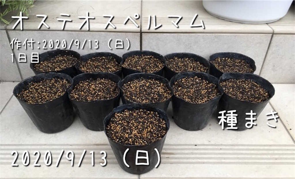 f:id:Mt_vegetable:20200914145708j:image