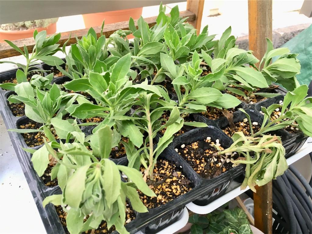 f:id:Mt_vegetable:20200914154229j:image