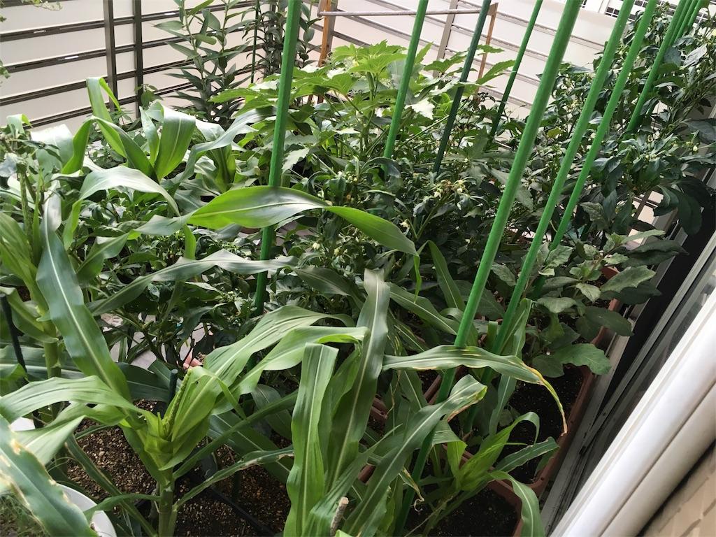 f:id:Mt_vegetable:20200914214535j:image