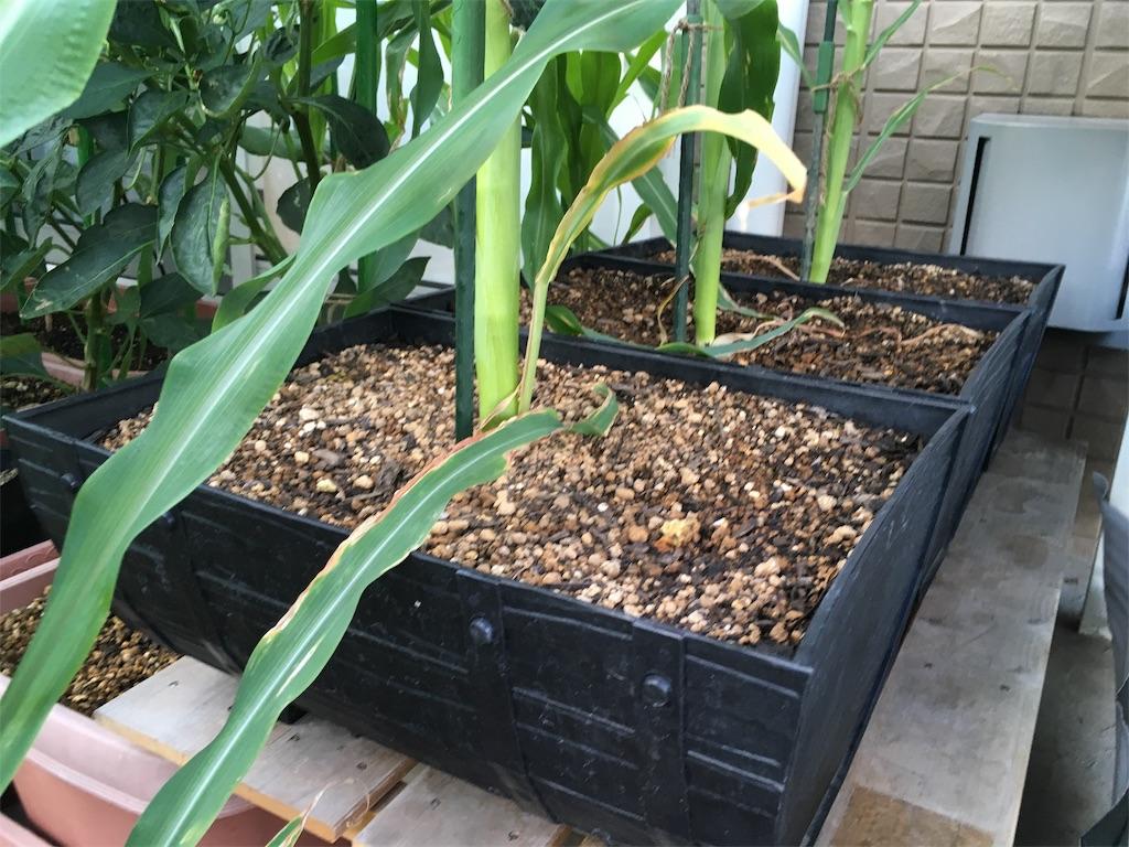 f:id:Mt_vegetable:20200914214543j:image