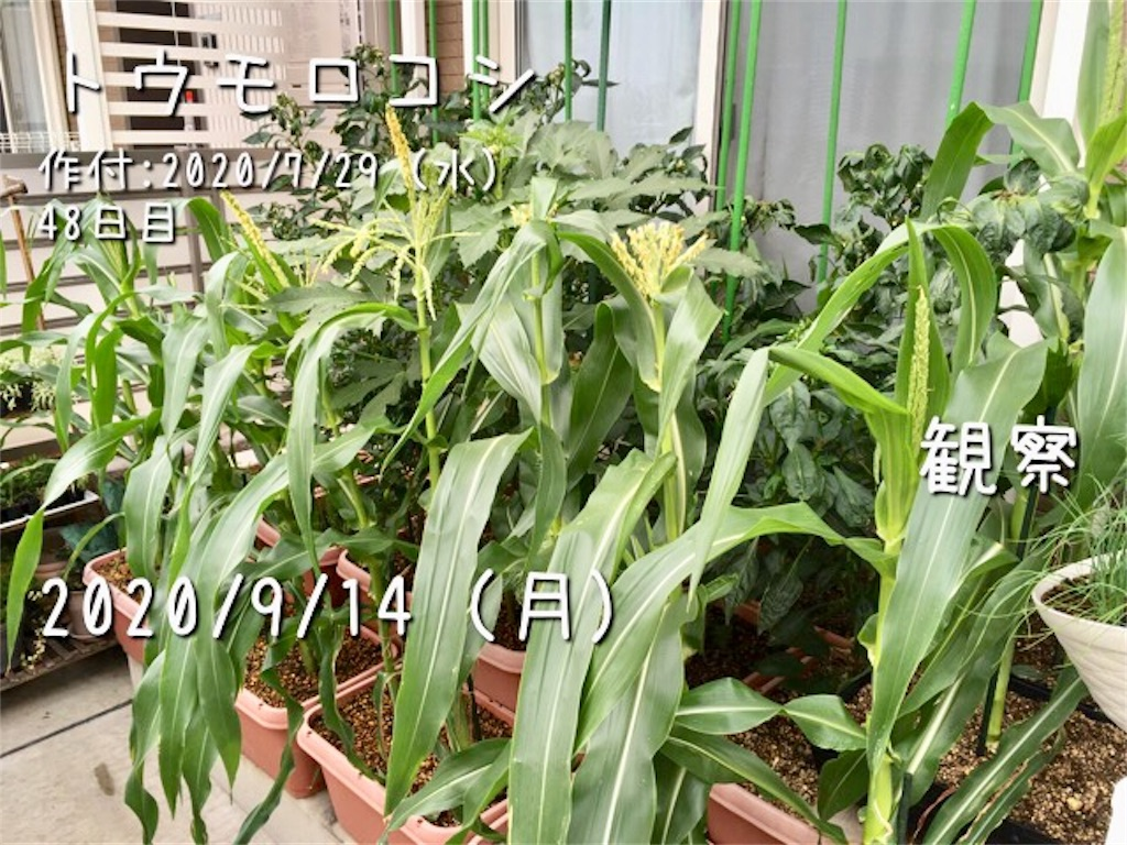 f:id:Mt_vegetable:20200914214559j:image