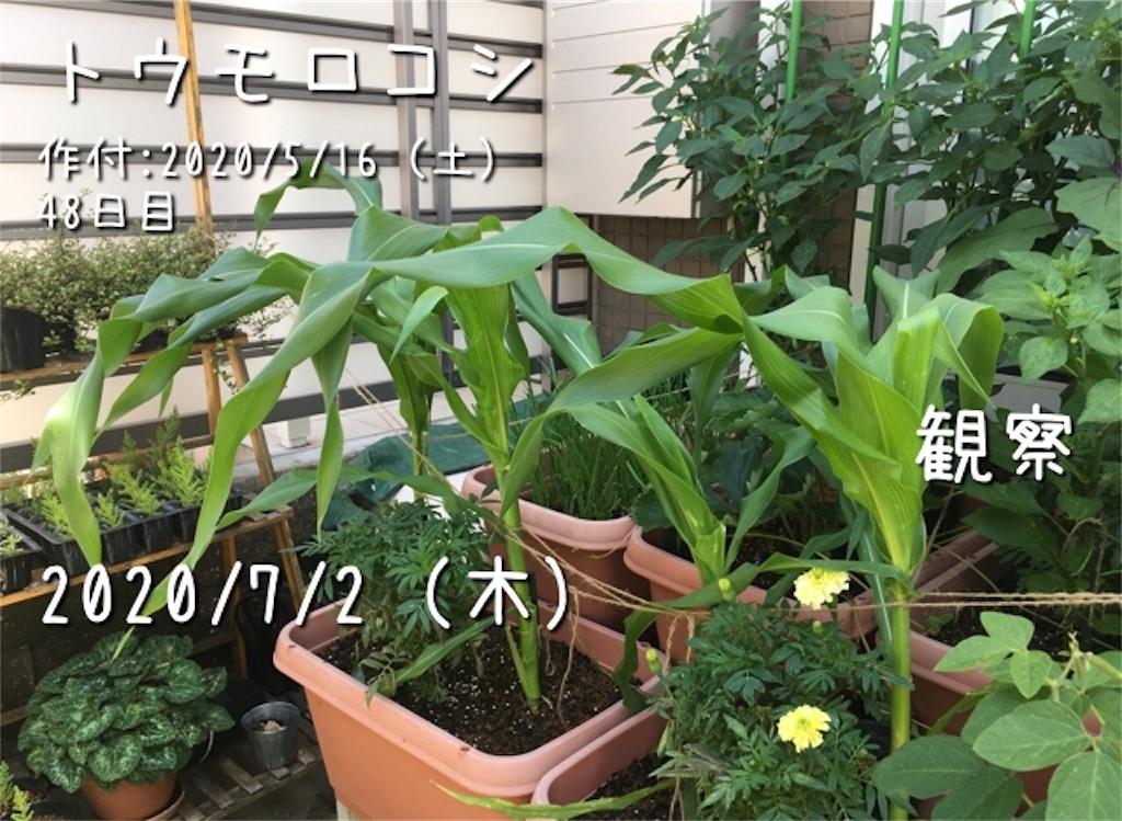 f:id:Mt_vegetable:20200914214831j:image