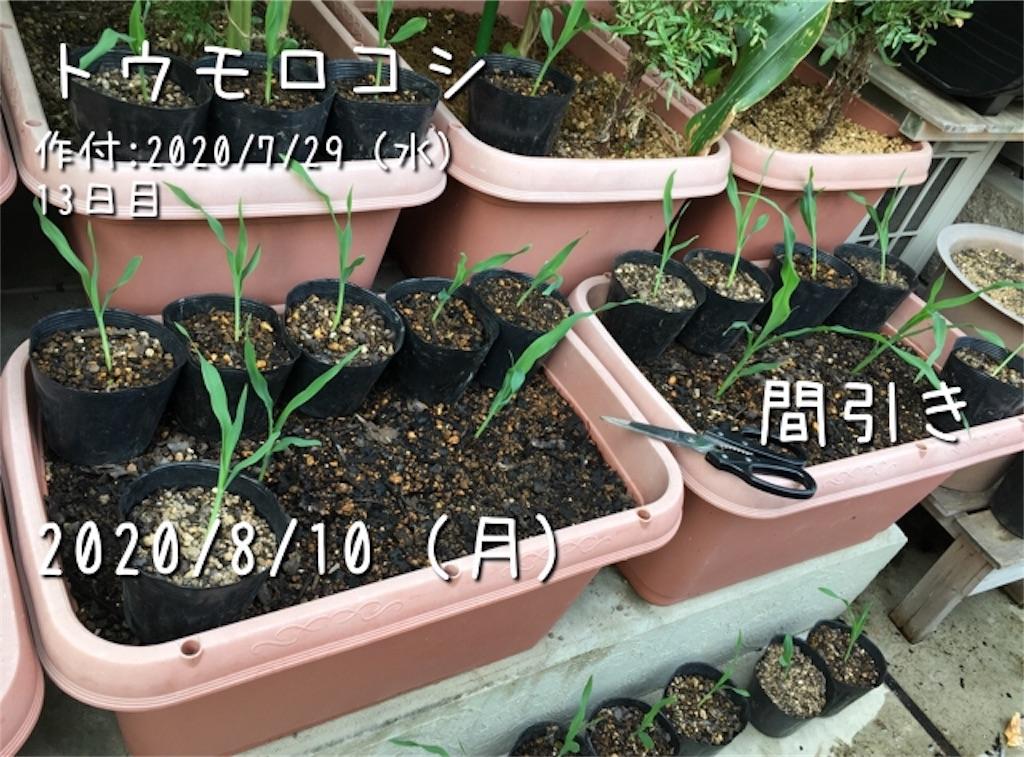 f:id:Mt_vegetable:20200915185208j:image