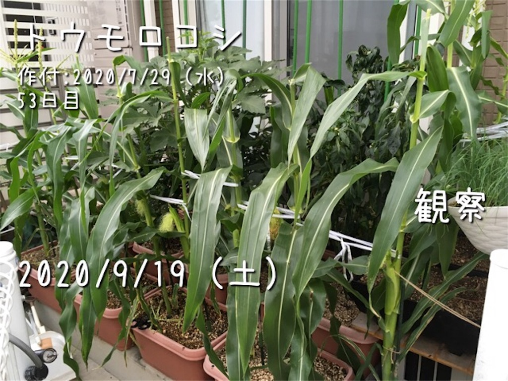 f:id:Mt_vegetable:20200920150540j:image