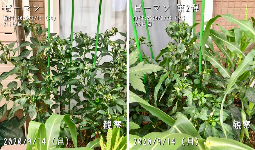 f:id:Mt_vegetable:20200920151732p:plain