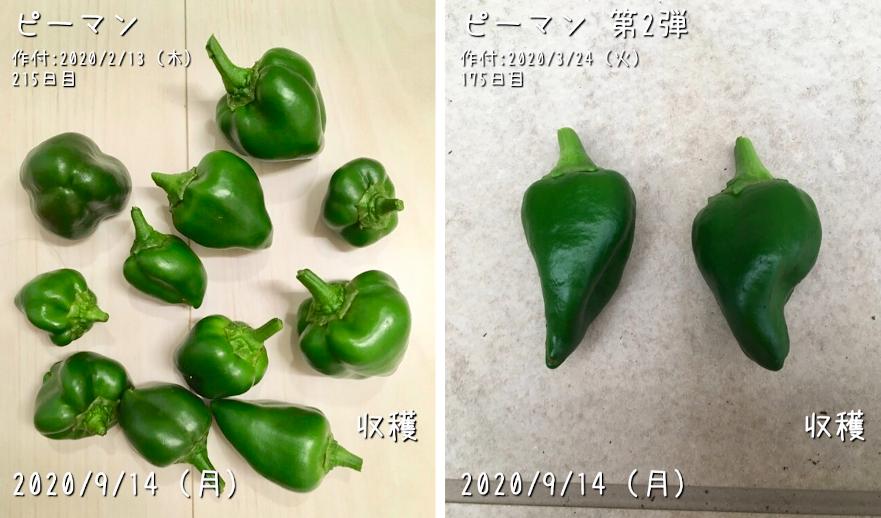 f:id:Mt_vegetable:20200920152517p:plain